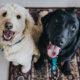 Make Apartment Pet Friendly