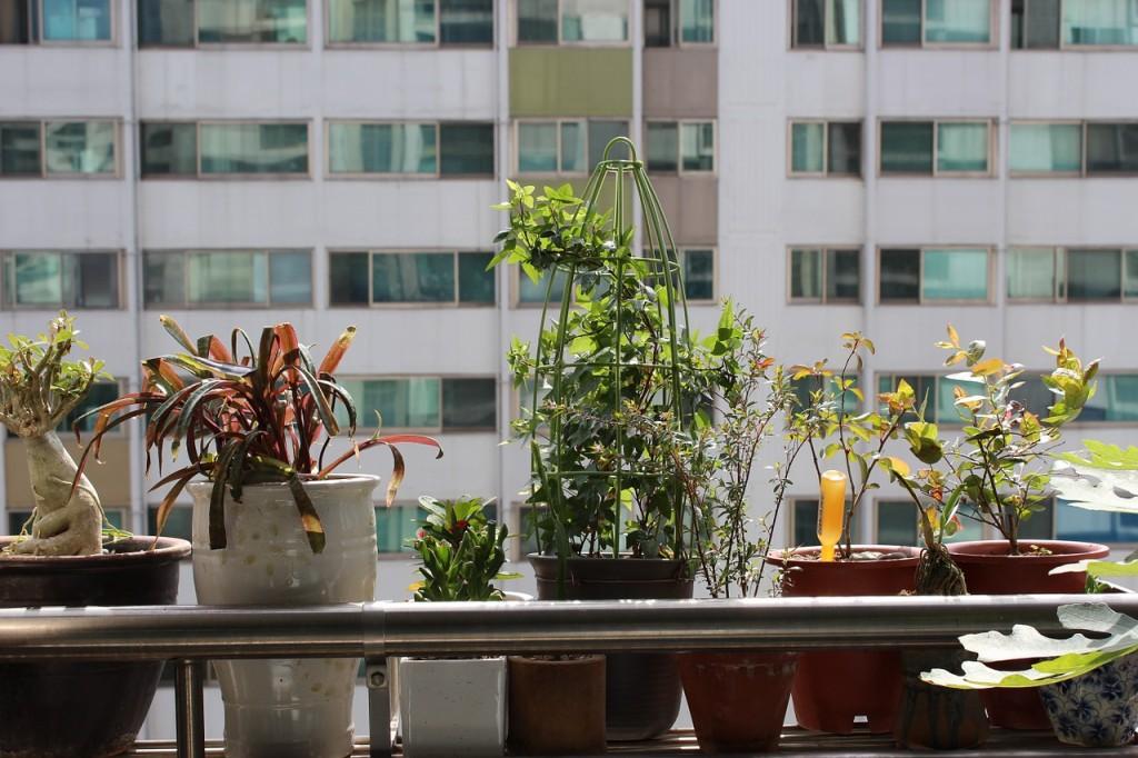 Apartment Plants