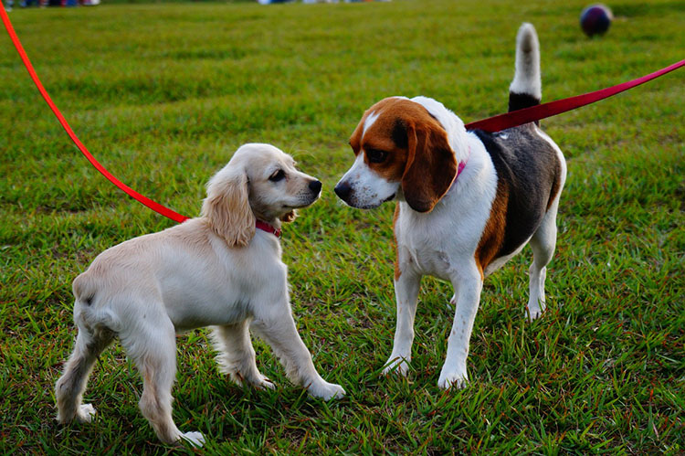 Best Dog Parks Denver