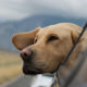 Best Dog Friendly Denver Places