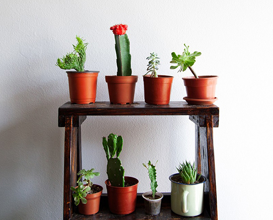 Best Houseplants for Colorado