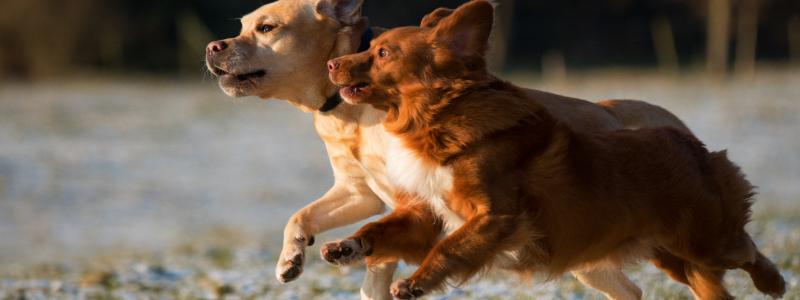 the best dog parks in denver