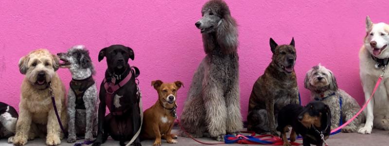 best dog parks in denver co