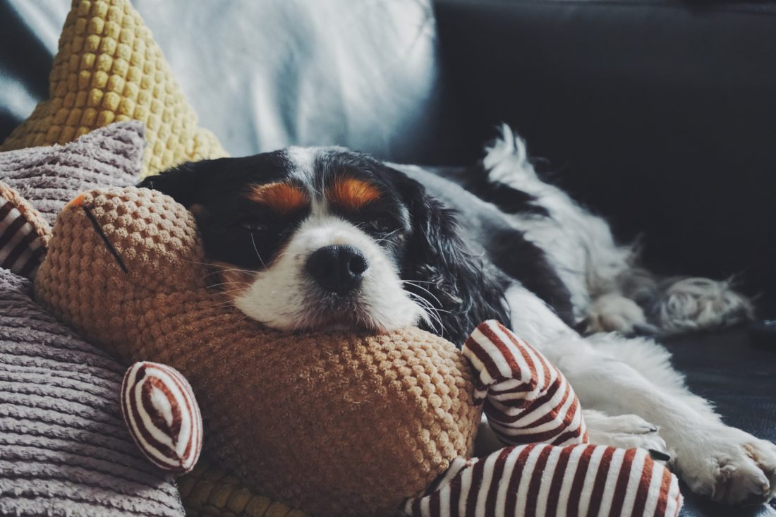 Find Your Pups Favorite Toys